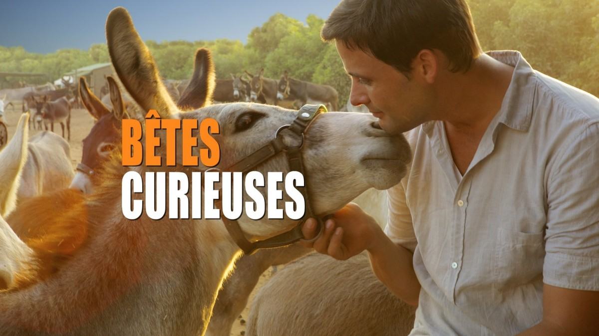 Bêtes curieuses