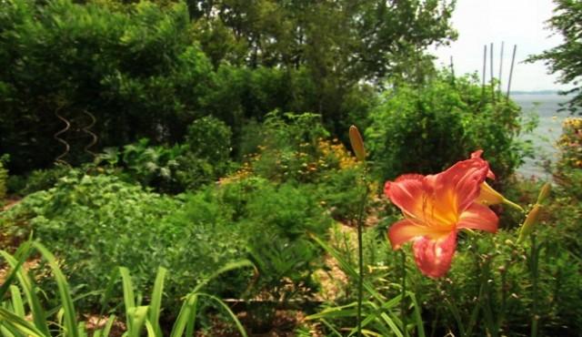 Jardin Vu par