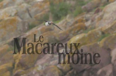 Le Macareux moine